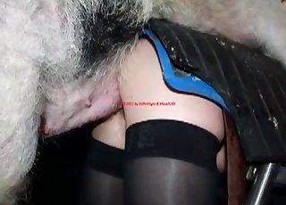 Pig nailed a horny zoophile from behind